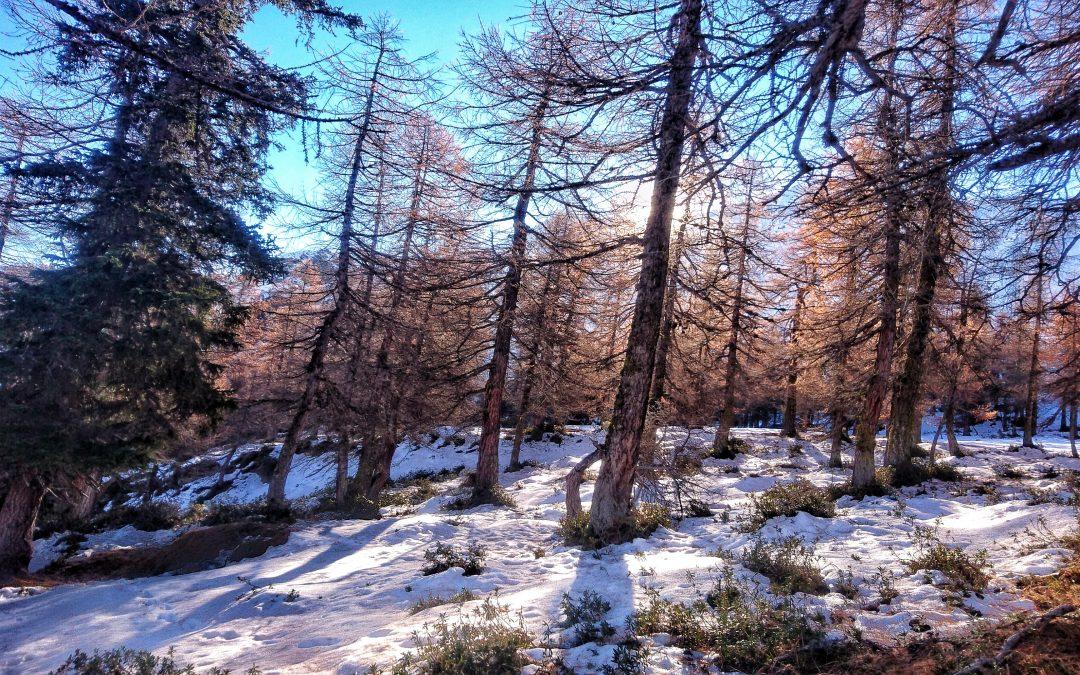 L'ombra di un nuovo inverno.