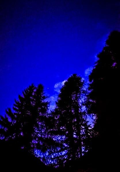Di cieli e alberi all'imbrunire
