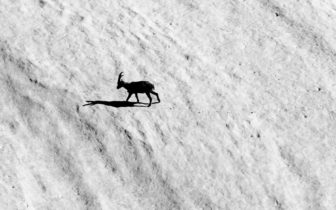 Passi stanchi e ombre su ghiaccio
