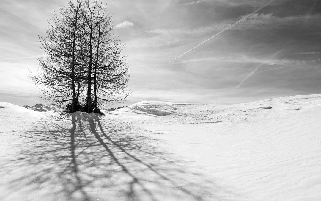 Ombre e neve