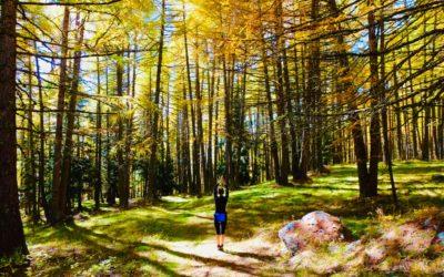 La magica foresta dello yoga